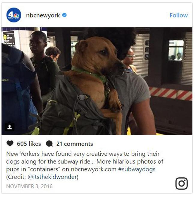 New Yorkers Find Clever Solution When NYC Bans Dogs In The Metro - Nyc subway bans dogs unless fit bag new yorkers reacted